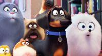 La vida secreta de las mascotas Crítica -The Secret Life of Pets Review